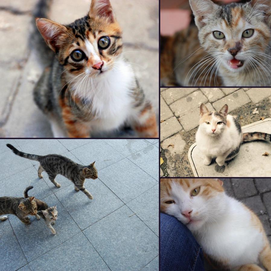 Bir semtin sokak hayvanları sizden kaçmıyorsa, orada yaşayın.