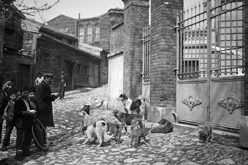 Dört Ayaklı Belediye: İstanbul'un Sokak Köpekleri Sergisi 22 Nisan'a Kadar Uzatıldı!