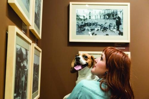 İstanbul Araştırmaları Enstitüsü'nden Davet:  #KöpeğinleGel